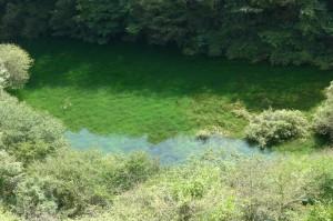 7年ぶりに出現した赤池