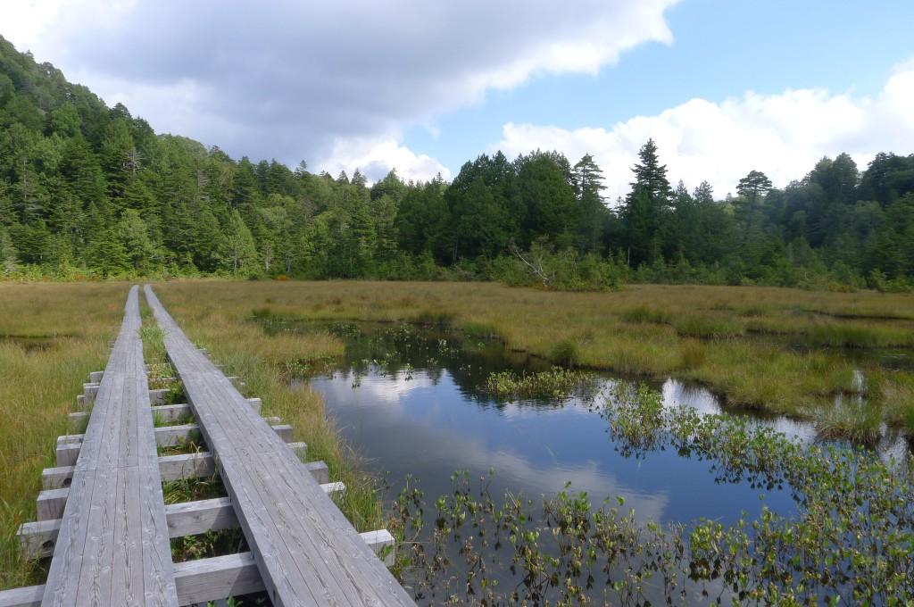 沼地のある森
