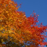 名栗湖周辺の紅葉